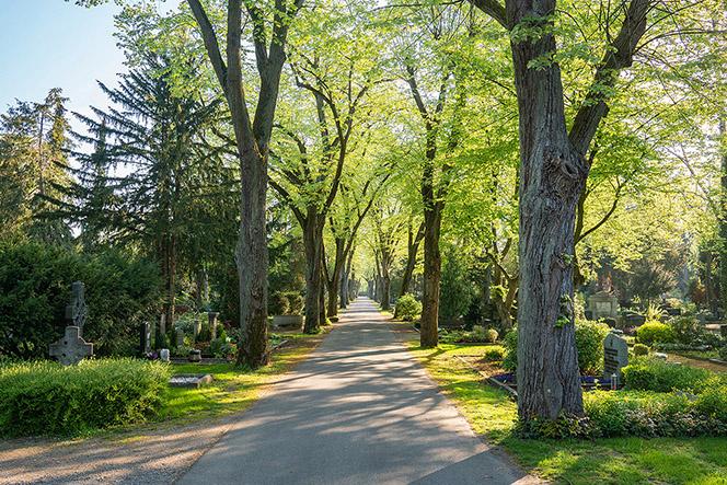 bestattungen friedhöfe bäume allee