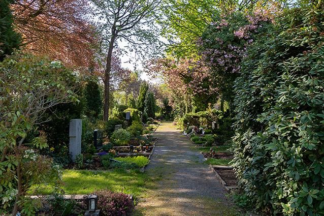 trauer beerdigung allee weg hecke rododendron