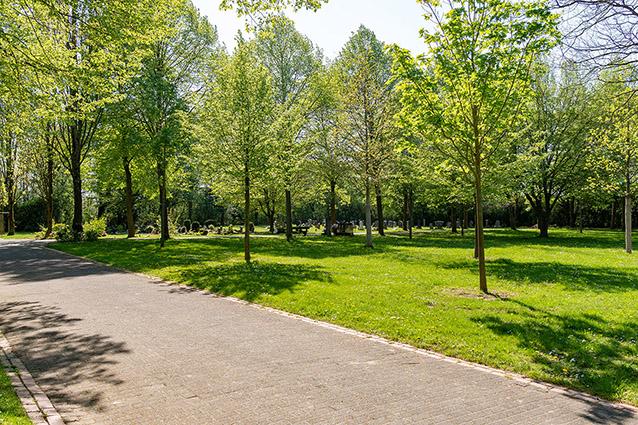 friedhöfe beisetzung beerdigung trauerfeier friedwald bestattungswald