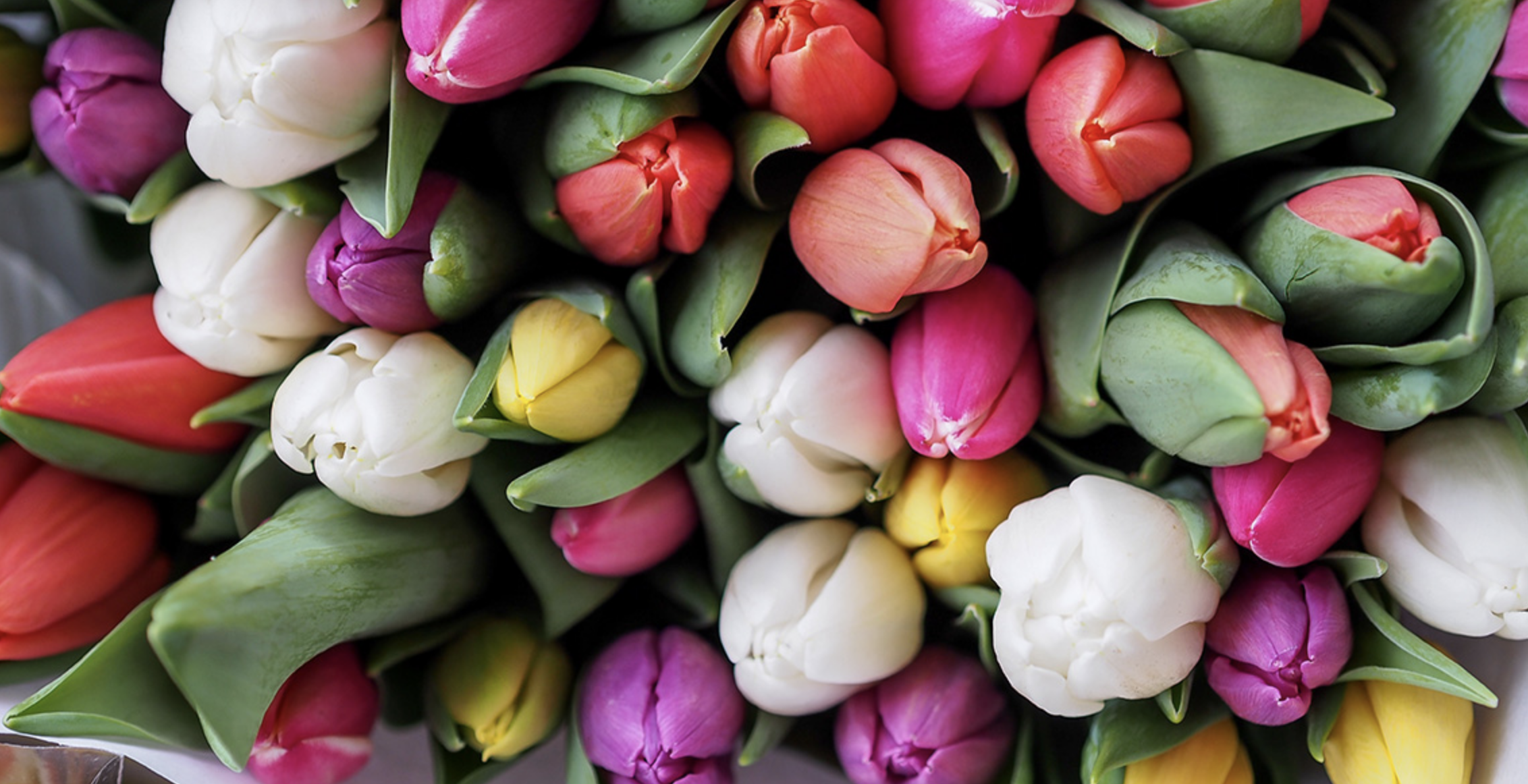 bunte tulpen bestattungen