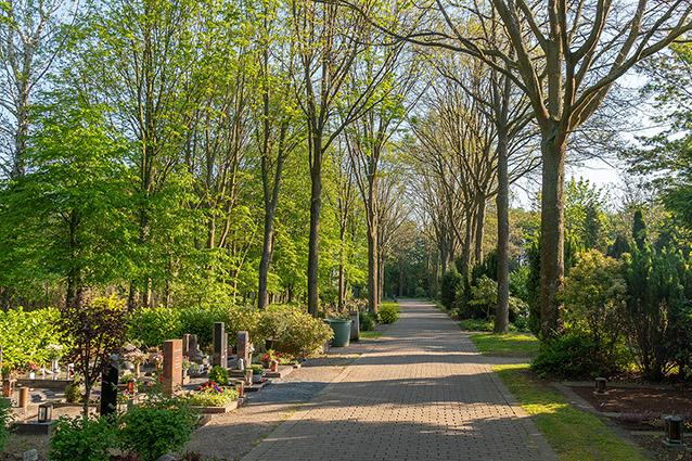 friedhöfe friedhof weg gräber grabstätten bepflanzung grabgestaltung