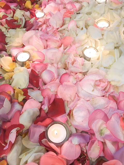rosenblätter farbverlauf licht